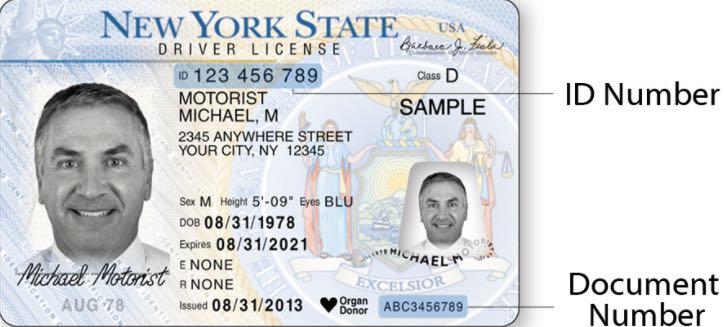 Sample DMV Licence